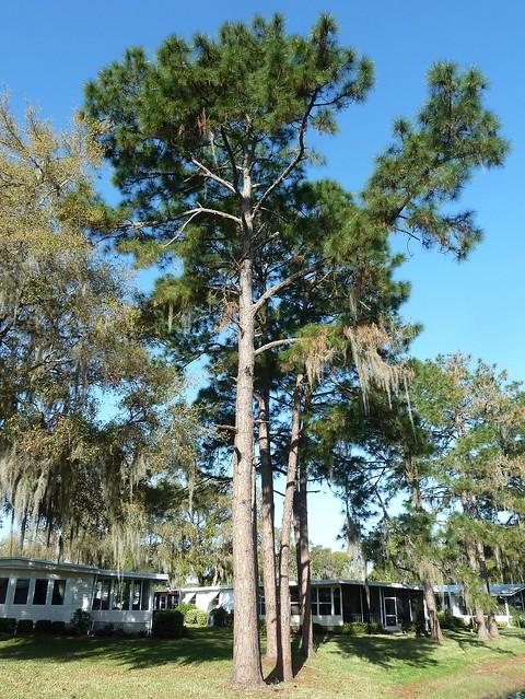 Leesburg, FL, Wintering in Florida at Hawthorne, a 55+ Community