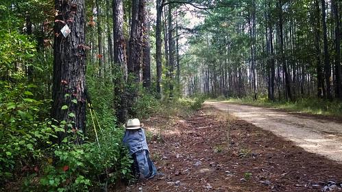 forest hiking ms desoto 2014 backpakcing blackcreektrail