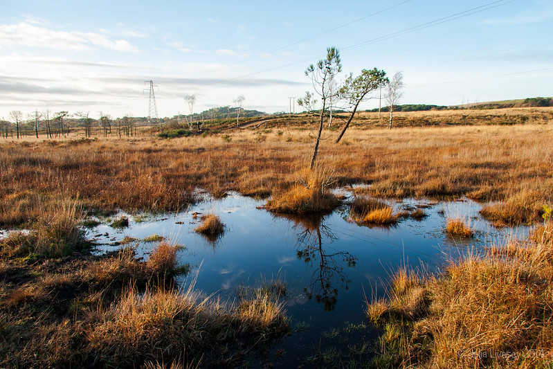 Reflections in a boggy pond