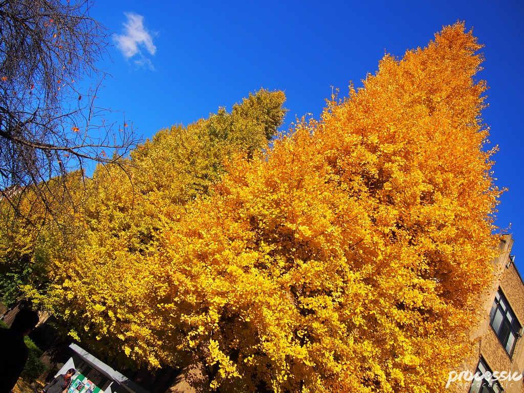 The University of Tokyo (Todai) TOKYO_0041