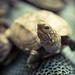 Small photo of Alfonsina la tortuga