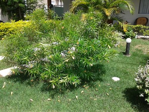 planta lourival 1
