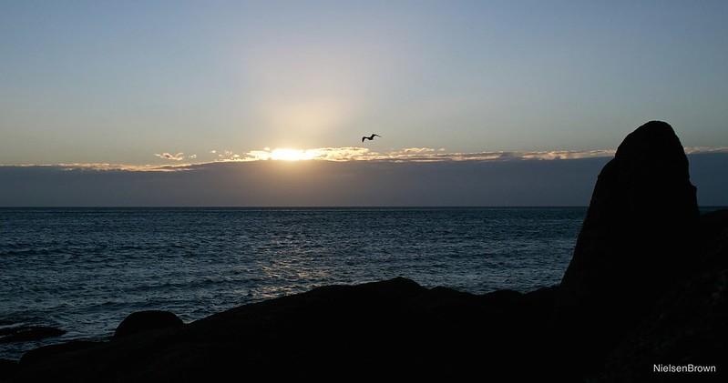 Gull and sunrise