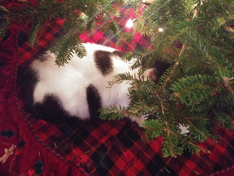 The Cats and the Christmas Tree