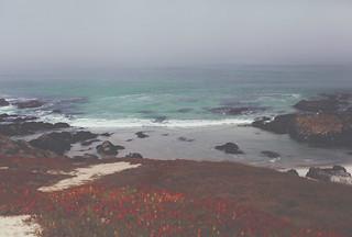 Pebble beach, California, USA ( 17-mile drive)