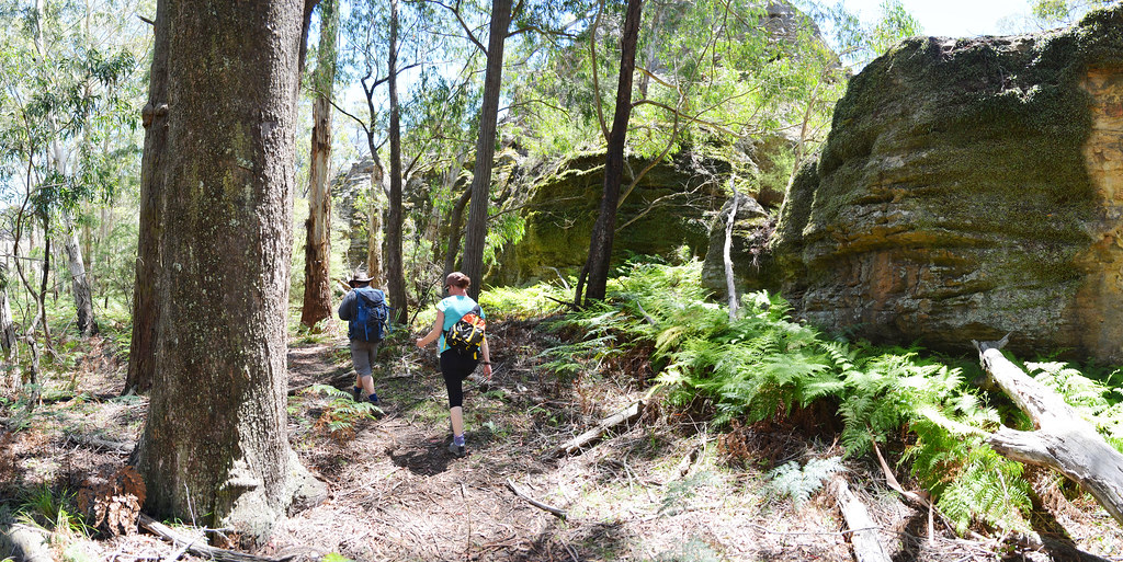 Ruined Castle Hike - Blue Mountains