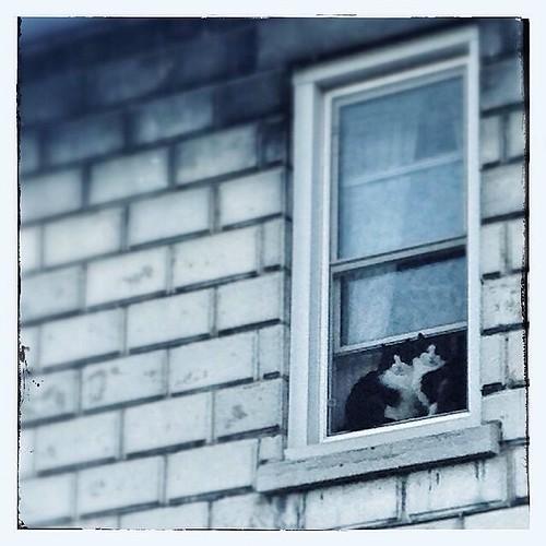 January 20 - Window