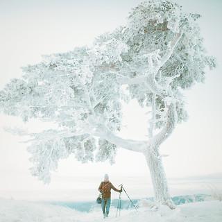 Sony a7 | DSC06570 茶臼山 高原 樹氷