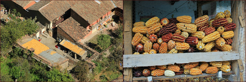 Corn, Ollanta