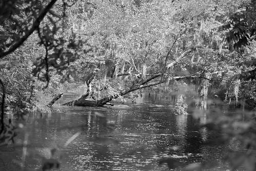 blackandwhite bw sc water canon river landscape southcarolina canon5d edisto blackwaterriver riverscape edistoriver longestfreeflowingblackwaterriverinnorthamerica