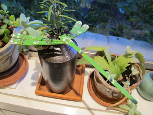 Bamboo dragon fly,