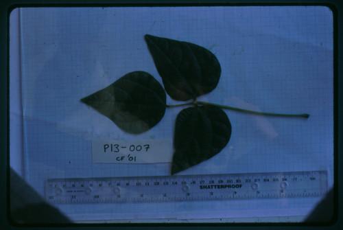 P13-007 CF01 L1