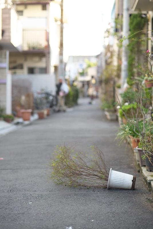 東京路地裏散歩 谷中・根津 2015年2月15日