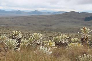 Reserva Ecológica El Angel, Carchi, Ecuador