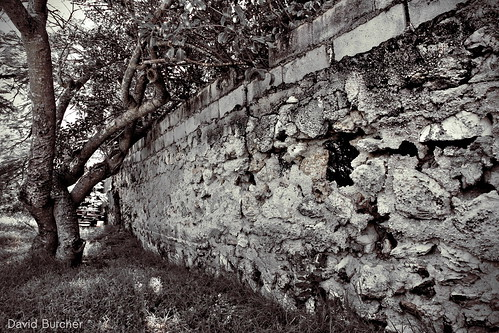 bw tree stone wall decay bahamas rocksound eleuthra efs1585f3556isusm