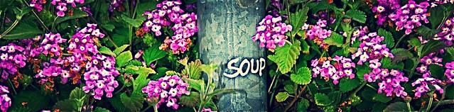 """""""Soup"""" 'n flowers in Echo Pk."""