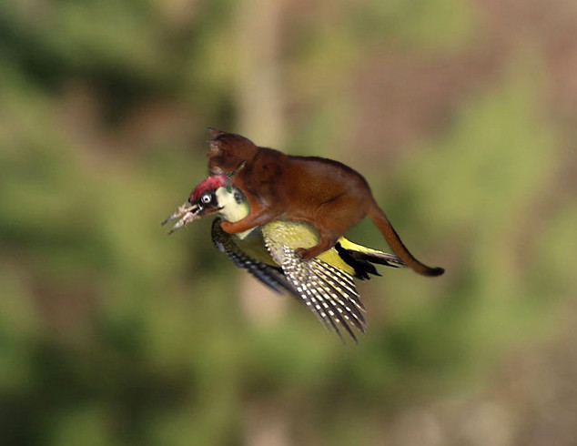 jake-riding-woodpecker-00