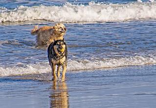 Jugando en la playa - Playing on the beach