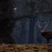 Windsor_Deers_Feb_15-6502 by Mel Sebastian