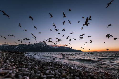 blue winter sunset lake mountains canon landscape schweiz switzerland landscapes suisse dusk swiss seagull gull lac crépuscule lakegeneva montreux lacléman markiii cantondevaud canon5dmarkiii 5dmarkiii