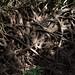 yew forest 1 by Jos van Wunnik