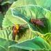 Horseflies by Hasan Yuzeir