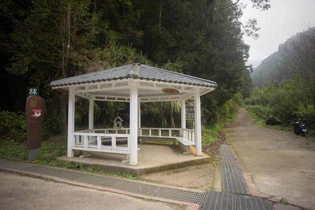 仁亭:腰繞杉林溪林道 -21