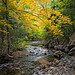 River Fall Colour by Darryl Robertson
