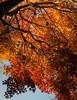 Last fires of autumn
