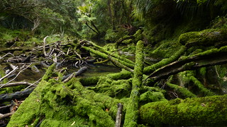 Mossy Log Jam, Bullock Creek