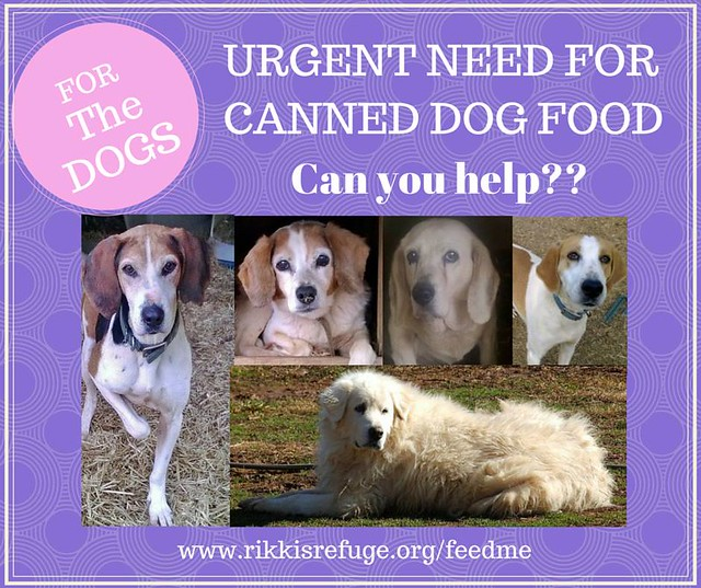 Should Canned Dog Food Be Served At Room Temperature