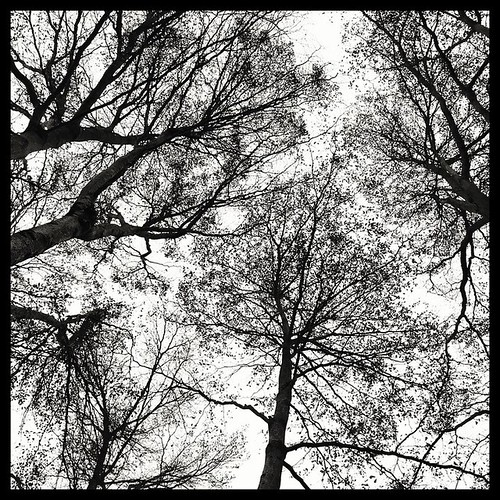Looking Up. #trees #taiwan #nantou #puli #台灣 #南投