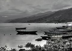 Wonderful Fewa Lake in BW