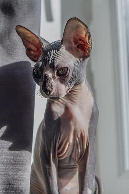 kitten who bites