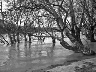 La crecida del Ebro (Zaragoza)