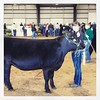 Ella with EM. She did great too. Got a Fifth. Very proud of my girls. #angus.