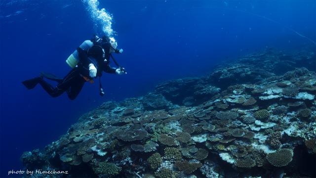 サンゴが去年の夏より元気になってました!