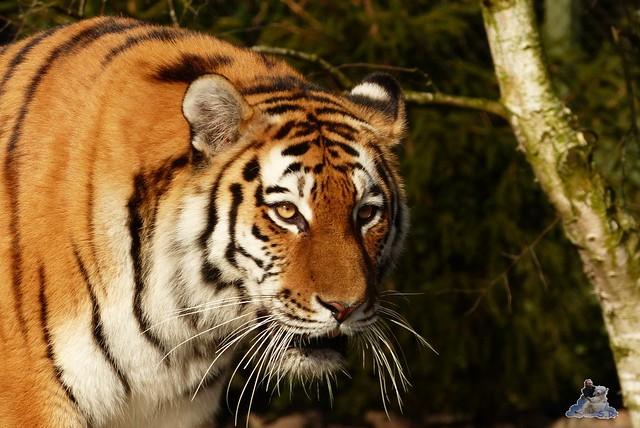 Tierpark Hagenbeck 27.02.2015  14