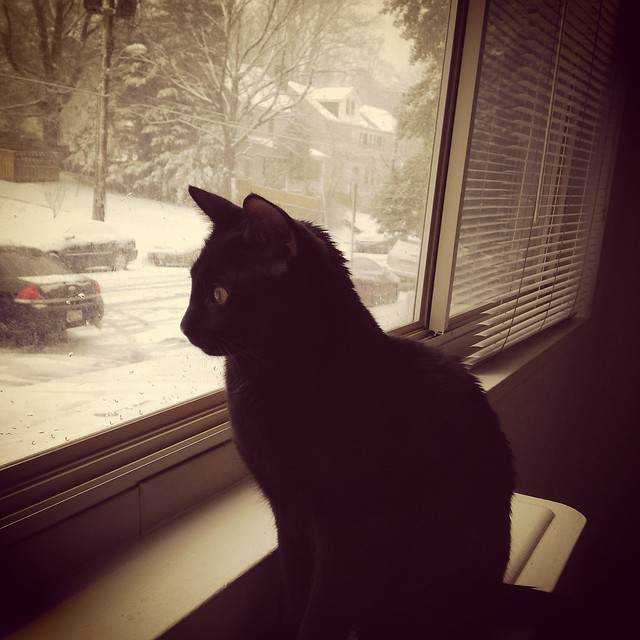 Oberon, snow watcher