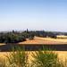Farm Fields Panorama by Celine Chamberlin
