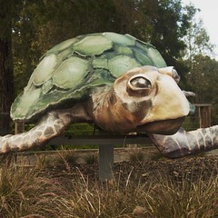 Apparently Rose the Turtle is a popular #pokamon site. I built it in 2009. It's out the front of @bulleenartandgarden and @bolingallery.