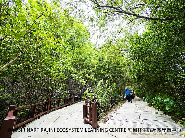 泰國 SIRINART RAJINI ECOSYSTEM LEARNING CENTRE 紅樹林生態系統學習中心 3