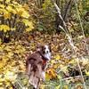 Genau meine Jahreszeit. Auch farblich. Habt einen bunten Tag! :dog2:️ Auf Wiederwedeln! :paw_prints::paw_prints::paw_prints::dog2::paw_prints::paw_prints::paw_prints: . . #bordercollie #bordercolliesofinstagram #border #hütehund #hütehunde #herdingdog #he