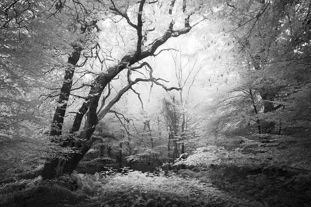 Epping Forest 22/10/16