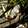 A spot in the sun #sunbathingcat #catsfindallthesunnyspots #garden #sunshine