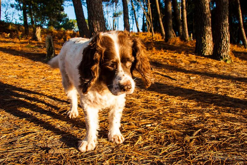 Max in the sunshine on Upton Heath