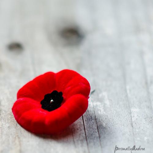 Remebrance Day Poppy | personallyandrea.com