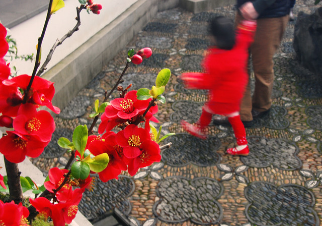 Vancouver's Chinese New Year 2015: Flowering Quince Bonsai in Sun Yat Sen Garden