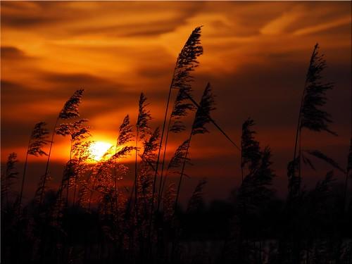 light sunset geotagged deutschland licht sonnenuntergang deu schleswigholstein scharbeutz pönitzamsee olympusem10 geo:lat=5403600885 geo:lon=1070025255