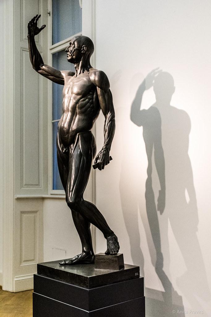 Johann Martin Fischer: Anatomische Figur - Ecorché, 1803 - a photo ...